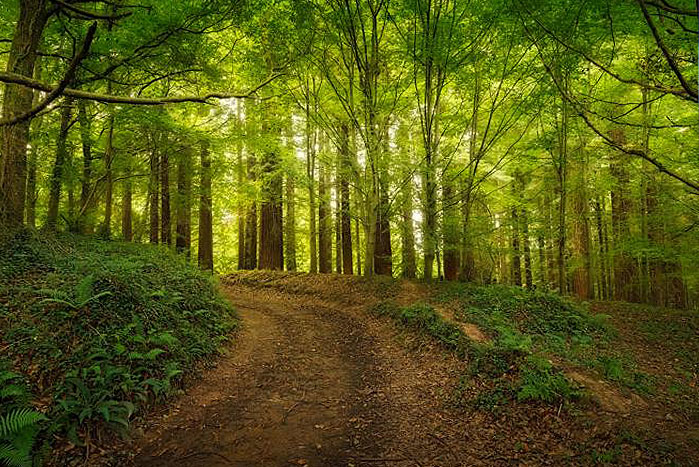 bosque secuoyas españa